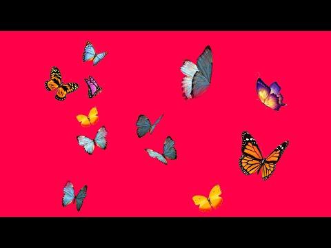 Playboi Less – Limousine (Audio)
